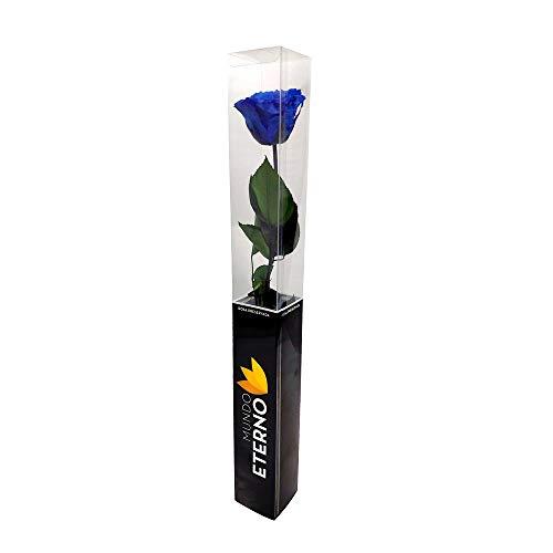 Mundo Eterno Rosa Eterna Preservada 55cm Azul Oscura